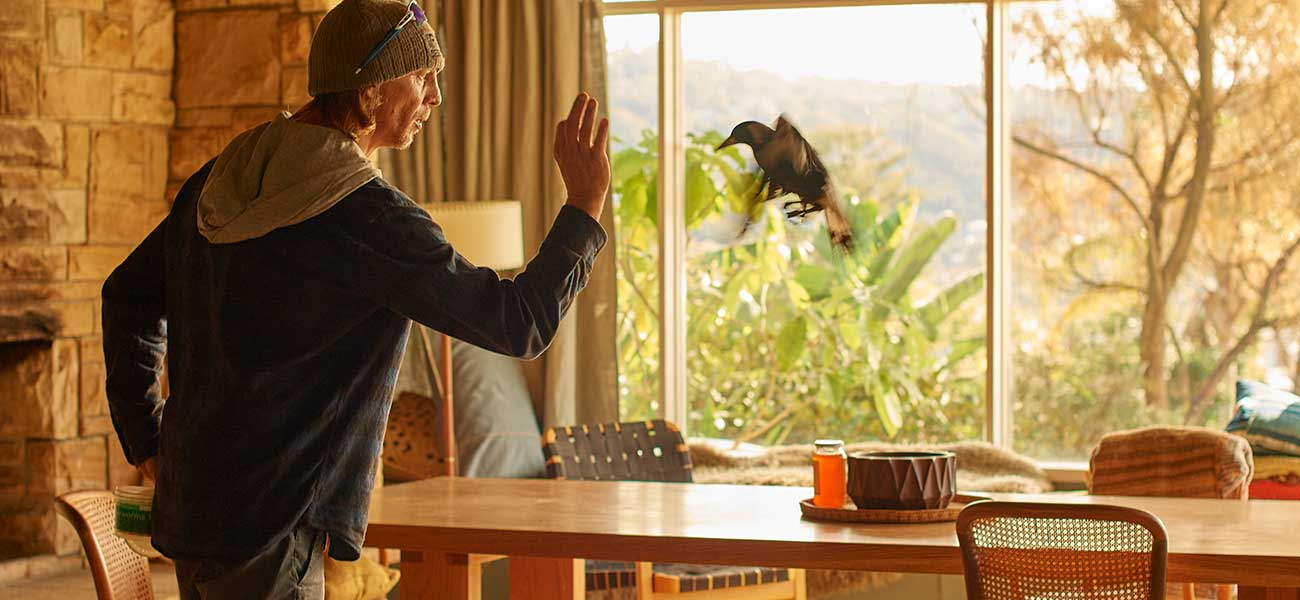 Paul Mander training a star magpie for Penguin Bloom (photo credit: Roadshow Films)